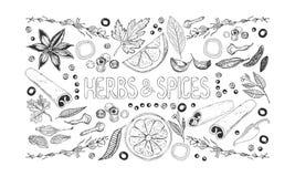 Ervas e fundo das especiarias ilustração stock