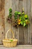 Ervas e girassóis que secam em uma parede do celeiro. fotografia de stock royalty free