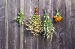 Ervas e grupo médicos do trigo mourisco na parede de madeira do celeiro Fotos de Stock