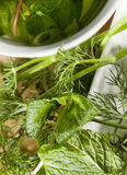 Ervas e infusão. Foto de Stock