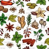 Ervas e teste padrão do esboço da cor da especiaria Imagens de Stock Royalty Free