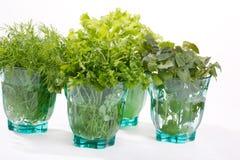 Ervas frescas Imagem de Stock Royalty Free