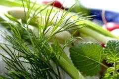 Ervas frescas Fotos de Stock