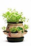 ervas frescas Imagens de Stock Royalty Free
