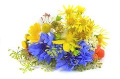 Ervas frescas Imagens de Stock