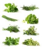 Ervas frescas Foto de Stock