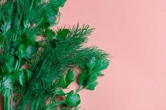 Ervas frescas aneto, salsa no fundo de papel coral Vista superior Copie o espaço imagem de stock royalty free