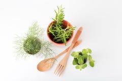 Ervas frescas aromáticas imagem de stock royalty free