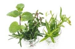 Ervas frescas da variedade no branco Fotografia de Stock