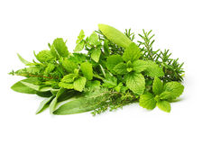 Ervas frescas das especiarias isoladas Imagens de Stock Royalty Free