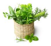 Ervas frescas das especiarias isoladas Fotos de Stock Royalty Free
