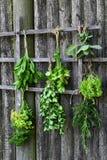 Ervas frescas de secagem Imagens de Stock Royalty Free