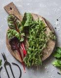 Ervas frescas do jardim - estragão, acelga, aipo, tomilho em uma placa de corte em um fundo cinzento, vista superior Imagens de Stock Royalty Free
