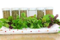 Ervas frescas e secas Fotografia de Stock