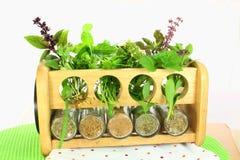 Ervas frescas e secas Imagem de Stock