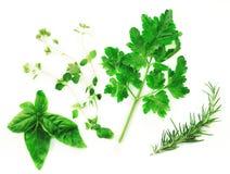 Ervas frescas em um fundo branco Imagem de Stock Royalty Free