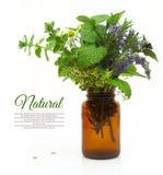 Ervas frescas em uma garrafa médica Fotografia de Stock