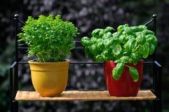 Ervas frescas em uns potenciômetros Imagens de Stock