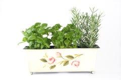 Ervas frescas (manjericão, salsa, rosemary) Imagens de Stock Royalty Free