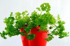 Ervas frescas na bacia Fotografia de Stock