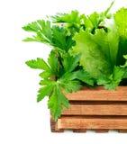 Ervas frescas na caixa de madeira Imagens de Stock