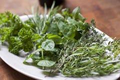 Ervas frescas na cozinha Imagens de Stock