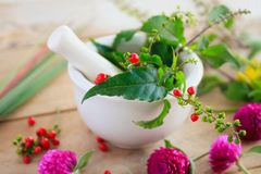 Ervas frescas no almofariz, medicina alternativa Fotografia de Stock