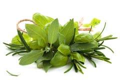 Ervas frescas no branco Imagem de Stock