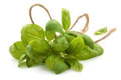 Ervas frescas no branco Foto de Stock Royalty Free