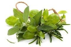 Ervas frescas no branco Imagens de Stock Royalty Free
