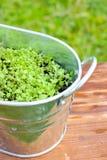 Ervas frescas no metal Flowerpo Imagem de Stock