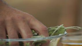 Ervas & fruto selvagens orgânicos video estoque
