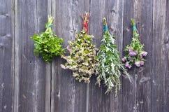Ervas médicas das várias horas de verão na parede de madeira velha Imagem de Stock Royalty Free