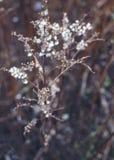 Ervas macias secas fotografia de stock