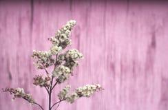 Ervas macias secas fotografia de stock royalty free