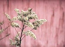 Ervas macias secas imagem de stock royalty free