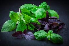 Ervas - manjericão Fotos de Stock