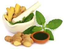 Ervas medicinais com almofariz e pilão foto de stock royalty free