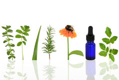 Ervas medicinais e culinárias Imagens de Stock