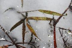 Ervas no gelo do rio Imagens de Stock Royalty Free