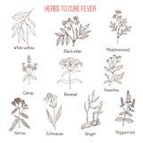 Ervas para a cura da febre ilustração royalty free