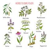 Ervas para a cura da febre ilustração stock