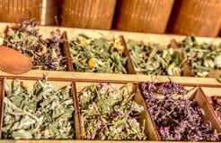 Ervas para o chá Ervas e coleção do chá Foto de Stock