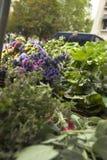 Ervas para a venda Foto de Stock