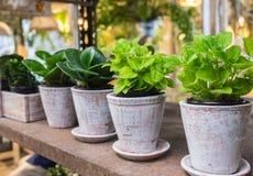 Ervas pequenas na plantação Foto de Stock Royalty Free
