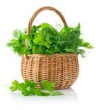 Ervas picantes frescas na cesta Imagens de Stock Royalty Free