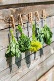 Ervas que penduram sobre o fundo de madeira Imagem de Stock Royalty Free
