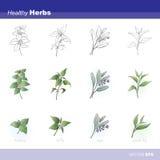 Ervas saudáveis ilustração do vetor