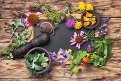 Ervas saudáveis do grupo Imagem de Stock