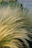 Ervas secadas do outono Fotografia de Stock